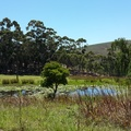 Pond along Van der Stel Pass