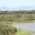 Rondevlei Nature Reserve, Cape Town